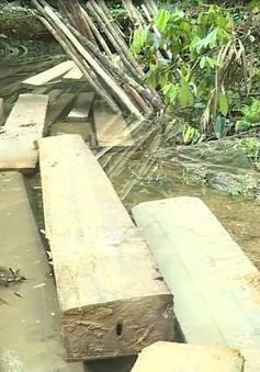 Quảng Bình phát hiện vụ phá rừng phòng hộ quy mô lớn ở huyện Tuyên Hóa