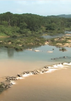 """Quảng Nam: Sông Tiên đang bị """"đầu độc"""" !"""