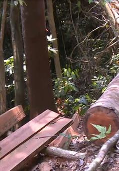 Bộ NN&PTNT ra công điện tăng cường ngăn chặn tình trạng phá rừng trái pháp luật