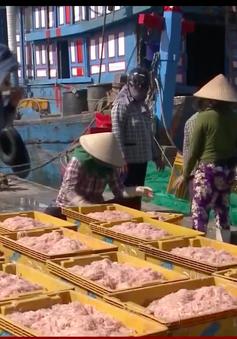 Quảng Ngãi: Ngư dân trúng đậm mùa ruốc biển