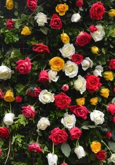 Ngắm hàng trăm cây hoa khoe sắc tại Lễ hội Hoa hồng 2018