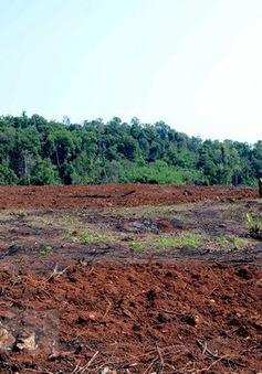 Vụ phá rừng tại Quảng Sơn, Đắk Nông: Kiến nghị xem xét, xử lý trách nhiệm của chủ rừng