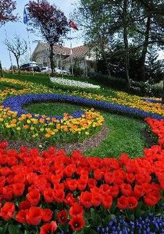 Rực rỡ Lễ hội hoa Tulip ở Thổ Nhĩ Kỳ