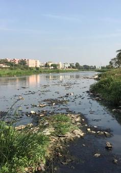 Cảnh báo các dòng sông bị ô nhiễm hóa chất dược phẩm