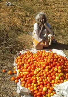 Nông dân Ấn Độ đổ cà chua ra đường vì giá rớt mạnh