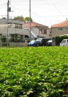 Nhật Bản lựa chọn thị trường nào để tập trung xuất khẩu nông sản?