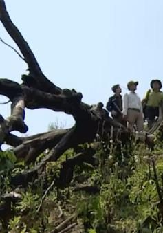 Bình Định lập chốt bảo vệ rừng giáp ranh trước nguy cơ bị xâm hại
