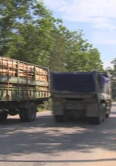 Quảng Nam: Xe tải trọng lớn ngang nhiên vào đường hạn chế