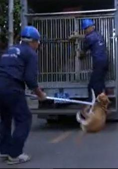 Đồng Tháp triển khai bắt chó thả rông trên đường