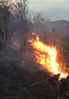 Nhiều địa phương cảnh báo nguy cơ cháy rừng