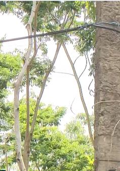 Thiếu đường điện, người dân Đồng Nai mua điện với giá 30.000 đồng/kW