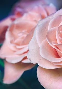 3 loại hoa có lợi cho sức khỏe