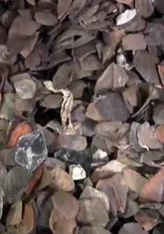 Thu giữ hơn 7 tấn vảy nghi là của tê tê