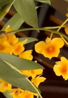 Đặc sắc phong lan 3 miền hội tụ tại Festival Huế 2018