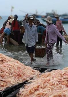 Ngư dân Phú Yên được mùa ruốc biển