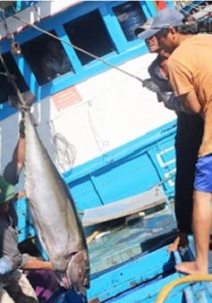 Hội nghị tăng cường công tác bảo quản, chế biến sản phẩm thủy sản từ khai thác