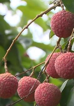 Từ 1/5, Trung Quốc siết chặt truy xuất nguồn gốc nông sản nhập khẩu