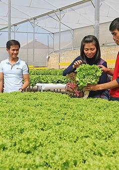 Người trẻ bỏ phố về quê làm giàu bằng nghề nông