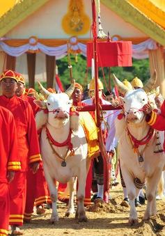 Lễ hội cày ruộng Hoàng gia ở Thái Lan