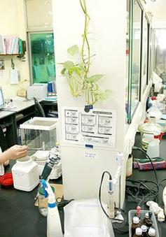 Phê duyệt Đề án phát triển Viện công nghệ sinh học, Đại học Huế