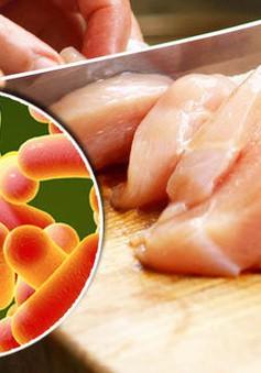 Nhiễm salmonella từ thực phẩm, cách phòng chống