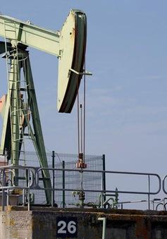 Giá dầu cao đe dọa triển vọng của ngành hàng không