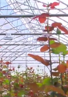 Lâm Đồng - Vùng nông nghiệp đầu tiên ứng dụng công nghệ 4.0