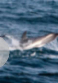 Khai thác cá ngừ không gây hại cho cá heo