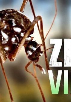 Tìm ra phương pháp xác định muỗi có virus Zika bằng ánh sáng