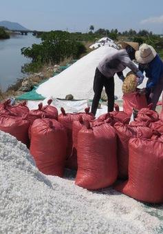 Muối rớt giá xuống 600 đồng/kg, diêm dân Phú Yên gặp khó