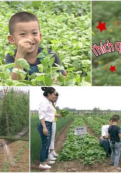 Cùng giọng ca Sao mai 2006 – Cẩm Tú khám phá trang trại rau sạch ăn ngay tại vườn