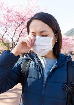Tình trạng dị ứng phấn hoa anh đào tại Nhật gây thiệt hại kinh tế