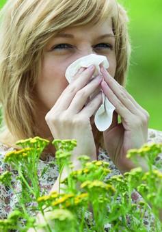 Lời khuyên của bác sĩ đối với dị ứng phấn hoa