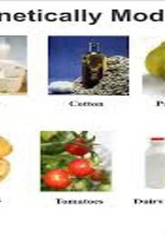 Thực phẩm biến đổi gen: Lợi ích hay nguy cơ?