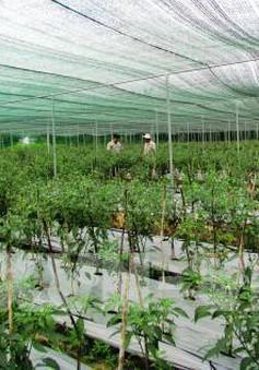 Nông nghiệp công nghệ cao đóng góp giá trị nông nghiệp
