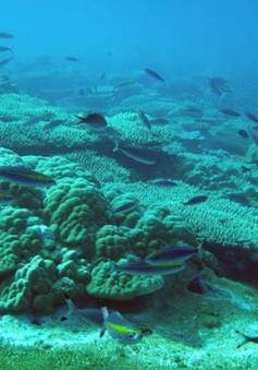 Việt Nam sẽ đối mặt với bão, lũ chưa từng có nếu các rạn san hô biến mất