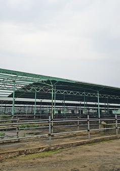 Hà Tĩnh: Khởi tố hai giám đốc chiếm đoạt 11 tỷ đồng từ dự án trại chăn nuôi bò
