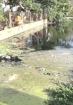Hàng ngàn hộ dân tại TP.HCM sống chung với dòng kênh ô nhiễm