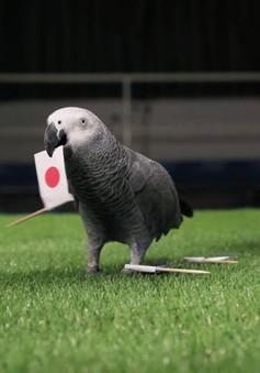 FIFA World Cup™ 2018: Vẹt tiên tri dự đoán Nhật Bản thất bại trong trận ra quân