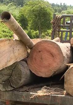 Liên tiếp phát hiện 2 vụ phá rừng tại Đăk Lăk