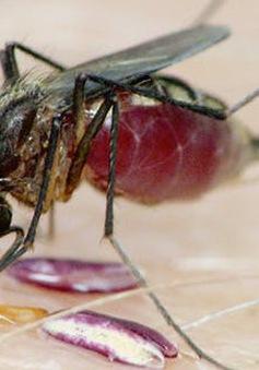 Phát hiện chủng virus mới lây truyền qua muỗi