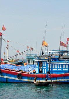 Vì sao ngư dân chưa được hỗ trợ vốn vay theo Quyết định 12 của Chính phủ