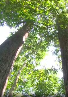 Nơi rừng hồi sinh