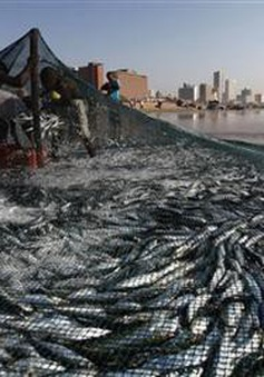 Indonesia kêu gọi thế giới chống nạn đánh bắt hải sản trái phép