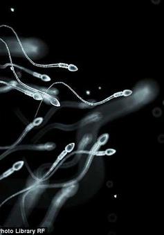 """""""Sốc điện"""" tinh trùng để loại bỏ dị tật bẩm sinh"""