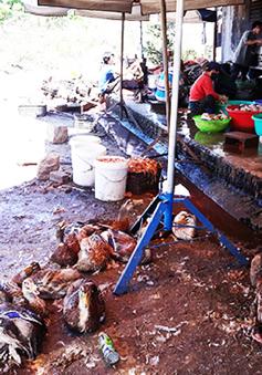 Ô nhiễm môi trường do giết mổ gia súc tại các chợ Nha Trang