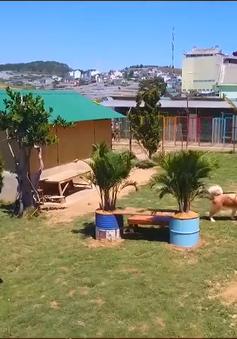 Khu vườn thú cưng