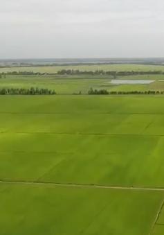 Tích tụ ruộng đất ở Đồng Tháp: Còn nhiều vướng mắc