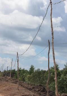 Cần nhiều giải pháp để xóa điện câu đuôi ở khu vực phía Nam