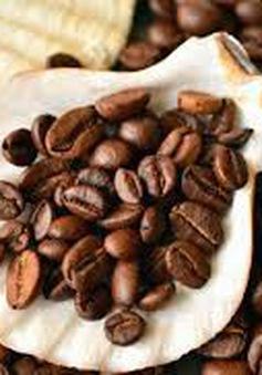 Ngửi mùi cà phê giúp cơ thể tỉnh táo mà không cần nạp caffeine